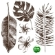 Hand Drawn Tropical Leaves and Flowers - GraphicRiver Item for Sale