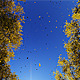 Driving Through Autumn Trees  - VideoHive Item for Sale