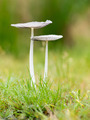 Mushrooms in a Green Grass Field with droplets - PhotoDune Item for Sale