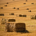 Straw bales background - PhotoDune Item for Sale