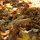 Dry Oak Leaves - VideoHive Item for Sale
