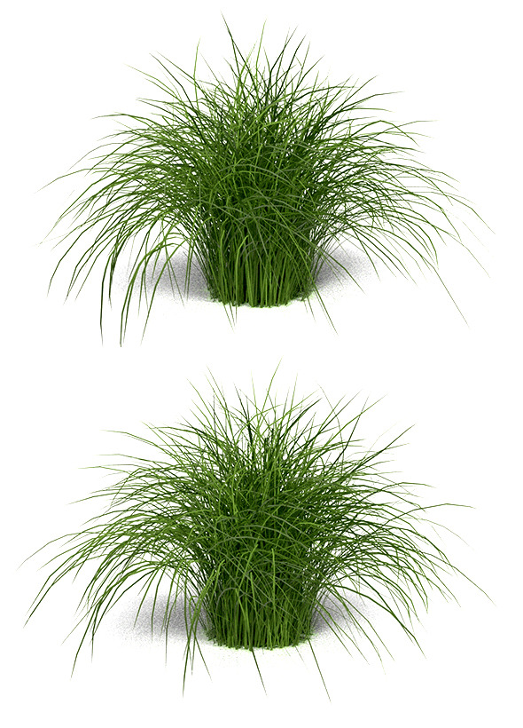 3DOcean Variegated Grass Morning Light 9091521