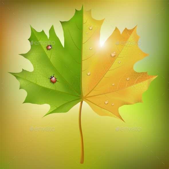 GraphicRiver Maple Leaf Summer Autumn 9093994