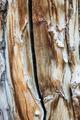 Aspen Wood Grain - PhotoDune Item for Sale