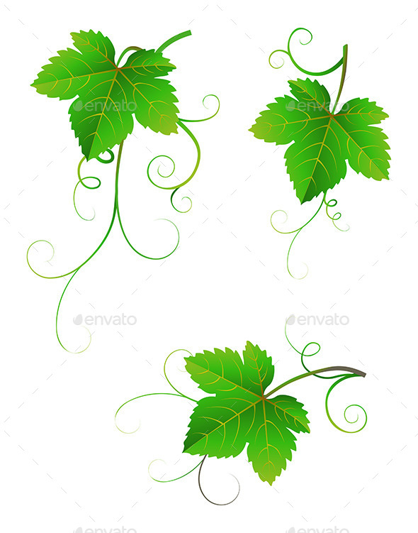 GraphicRiver Grape Leaves 9105665
