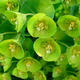 green flower closeup - PhotoDune Item for Sale