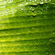 Green Leafs 163 - VideoHive Item for Sale