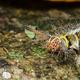 Hairy caterpillar on tree - PhotoDune Item for Sale