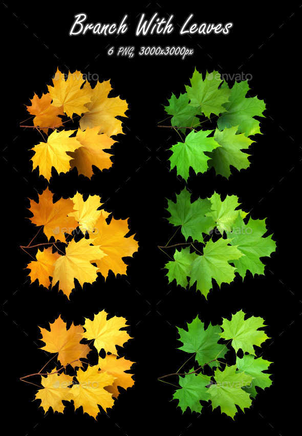 GraphicRiver Branch With Leaves Maple 9114270