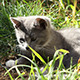 Kitten Sitting in Grass - VideoHive Item for Sale
