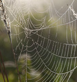 spider web with dew drops - PhotoDune Item for Sale