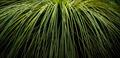 Green Leaf Background - PhotoDune Item for Sale