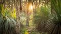 Golden Forest - PhotoDune Item for Sale