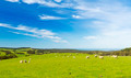 Sheep - PhotoDune Item for Sale