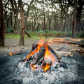 Campfire In Forest - PhotoDune Item for Sale