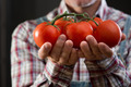 Farmer's organic fresh tomatoes - PhotoDune Item for Sale