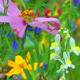 Colorful Flowers 8 - VideoHive Item for Sale