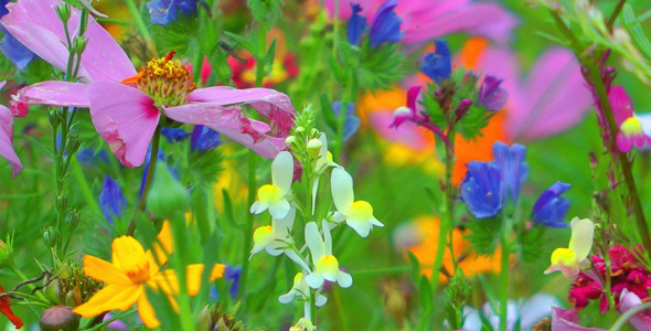 Colorful Flowers 8