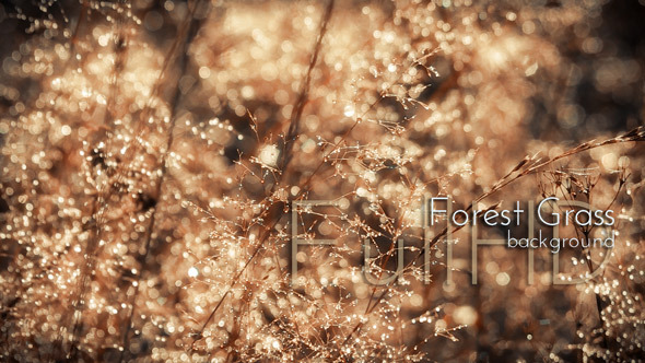 Sparkling Morning Forest Grass