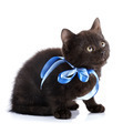 Black kitty with a blue tape. - PhotoDune Item for Sale