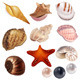 Set with Realistic Shells and Pearls - GraphicRiver Item for Sale