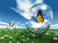 butterfly  in a bubble in the meadow - PhotoDune Item for Sale