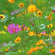 Colorful Flowers 1 - VideoHive Item for Sale