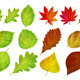 Set with Different Autumn and Green Lleaves - GraphicRiver Item for Sale