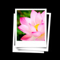 Photo frame of lotus flower isolated on black background - PhotoDune Item for Sale