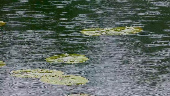 Lake And Rain