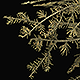 Low Poly Pine Tree - 3DOcean Item for Sale