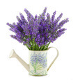 Watering can with lavender - PhotoDune Item for Sale