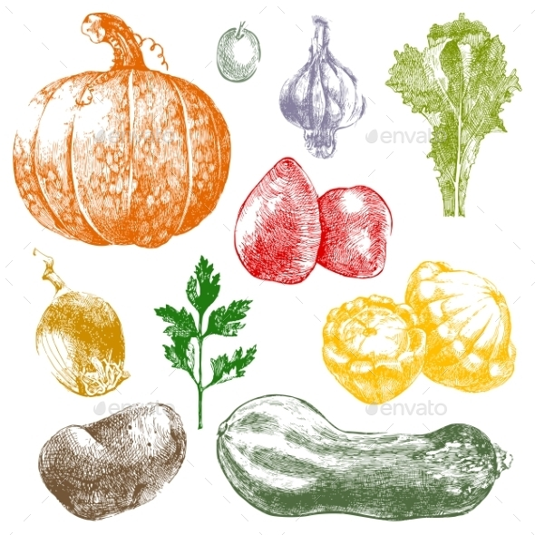 GraphicRiver Hand Drawn Vegetables 9147265