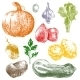Hand Drawn Vegetables - GraphicRiver Item for Sale