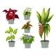 Six Ornamental Plants - GraphicRiver Item for Sale