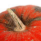 Top of pumpkin on white background - PhotoDune Item for Sale