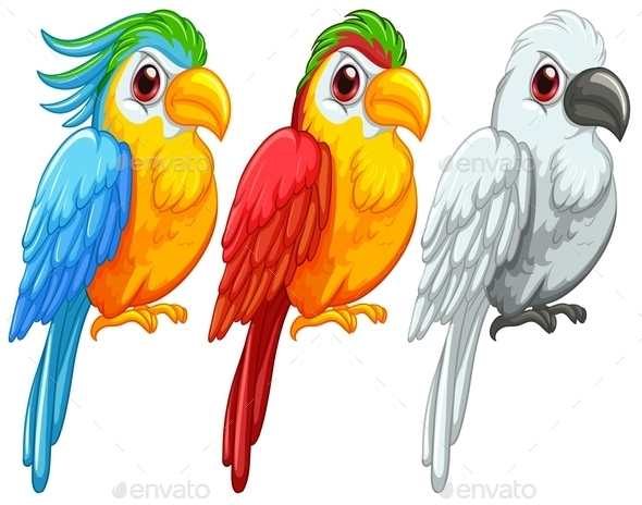 GraphicRiver Parrots 9149143