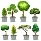 Potted Plants - GraphicRiver Item for Sale