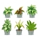 Green Leafy Plants - GraphicRiver Item for Sale