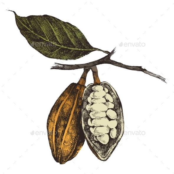 GraphicRiver Hand Drawn Cocoa Beans 9152820
