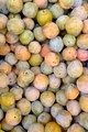 greengage plums - PhotoDune Item for Sale
