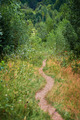 Footpath in the forest - PhotoDune Item for Sale