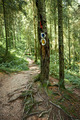 Hiking trail in forest - PhotoDune Item for Sale