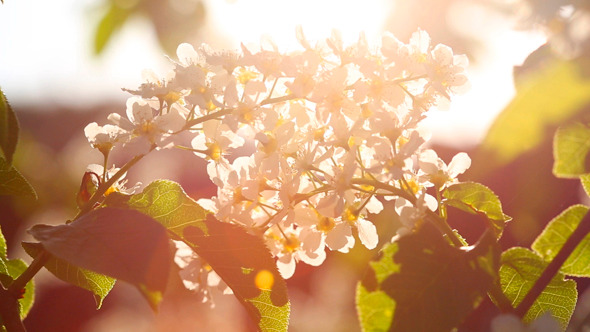 Sun Shines Through Flowers