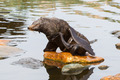 South American sea lion - PhotoDune Item for Sale