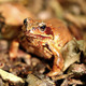 Frog In A Forest - VideoHive Item for Sale