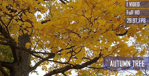 Autumn Color Changes
