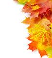 autumn leafs - PhotoDune Item for Sale