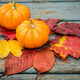 Little Pumpkins - PhotoDune Item for Sale