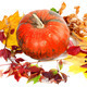 Red ripe pumpkin and autumn leaves on white background - PhotoDune Item for Sale
